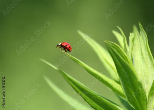 Ladybug standing on Green Plant