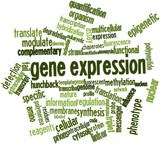 Word cloud for Gene expression