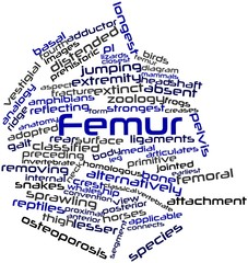 Word cloud for Femur