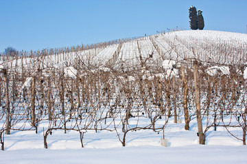 Tuscany: wineyard in winter