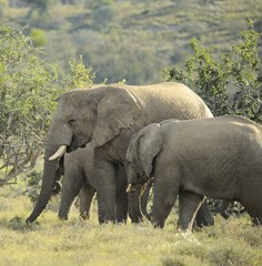 Elefanti in famiglia