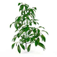 Exotic plant bush tree