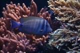 Fototapete Ozean - Tauchen - Fische