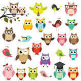 Fototapety set of owls