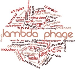 Word cloud for Lambda phage