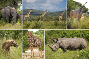 Wildlife Variety