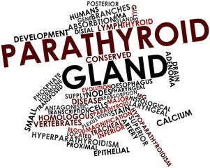 Word cloud for Parathyroid gland