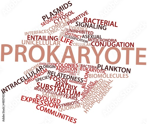 Word cloud for Prokaryote