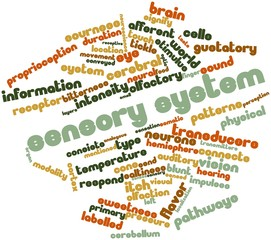 Word cloud for Sensory system