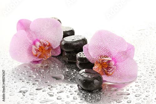Fototapeten,steine,orchidee,nass,die andere hochzeit