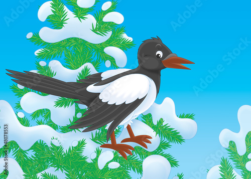 magpie perched on a snow-covered fir tree
