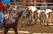 rodeo competition is about to begin - 48078918