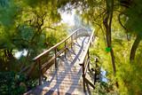 Fototapety Japanese bridge