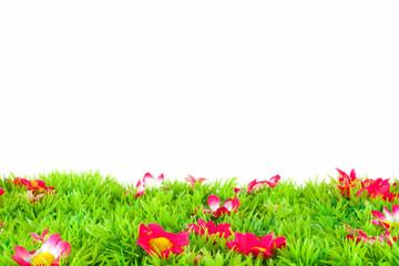 bunte farbige Wiese mit Blumen isoliert vor weiss