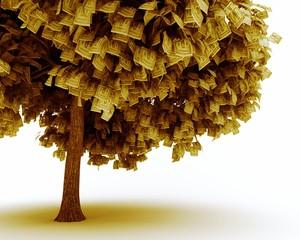 I soldi non fioriscono sugli alberi