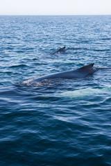 Coppia di balene