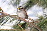 Fototapety Bird In Snow