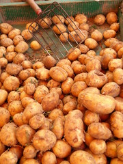 Potatoes on market