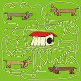 dog - labyrinth