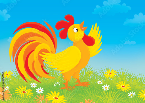 Rooster crowing on a field with flowers