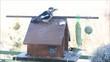 Gartenvögel am Vogelhäuschen - Timelapse