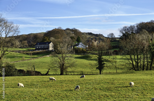 Sheep grazing in the Winster Valley, Cumbria