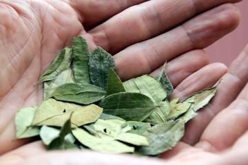 Cocablätter in Handflächen