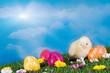 Küken mit Ostereiern auf Blumenwiese