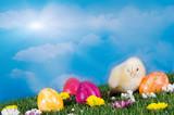 Fototapety Küken mit Ostereiern auf Blumenwiese