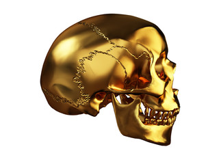 череп в профиль