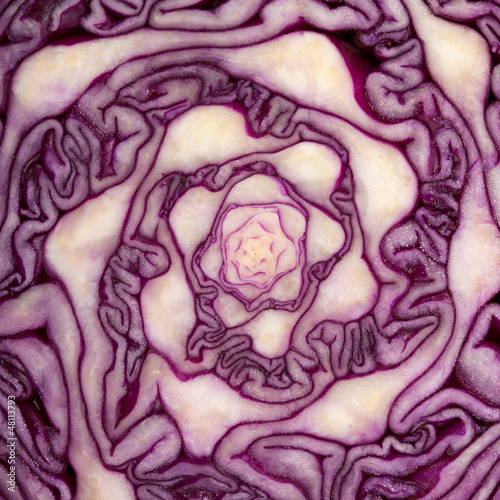 Cabbage cut