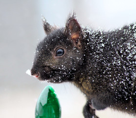 Snow Covered Squirrel - standing beside green Christmas light
