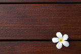 frangipani flower on wood texture background
