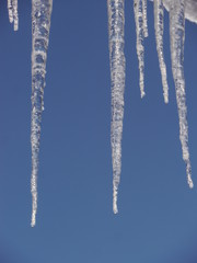 icicles icicle winter