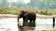 Bathing elephant in Nepal