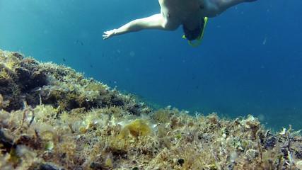 Diver snorkling