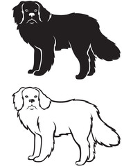 Contour and silhouette of Newfoundland dog