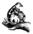 Lemur - Lémurien - Phalanger tacheté - Opossum