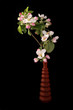 Bouquet of flowers and blossoms of apple, isolated on black