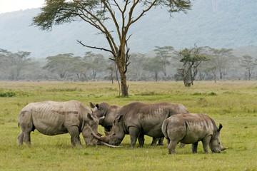 Nakuru lake rhinos