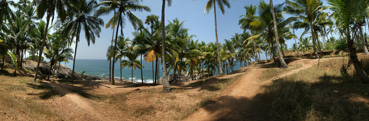 Coconut palms on the ocean shore. Panorama
