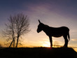 silhouette donkey