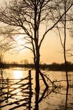 Fototapety tree silhouette