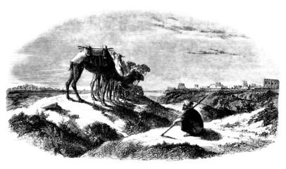 Trad. Camel-Rider - Chamelier