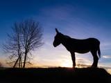 Fototapeta niebieski - brązowy - Zwierzę Hodowlane