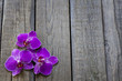 Orchid on wooden boards spa cosmetic abstract vintage background