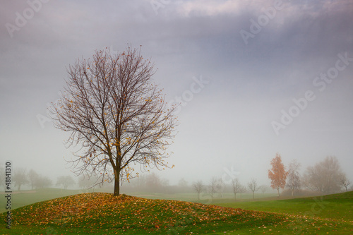 Autumn on the golf course in the mist at sunrise