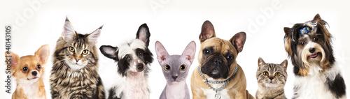 Cat and dog, medium group of animals
