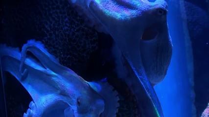 Octopus on stone