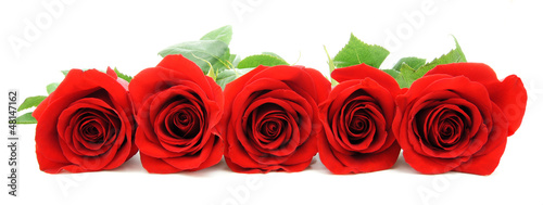 Beautiful red roses arranged as a horizontal border
